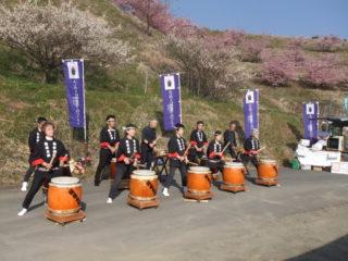 由比八千代桜祭り