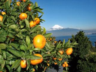 海越しの富士山