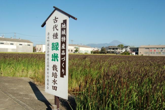 古代種 緑米