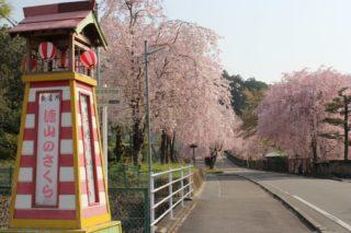 徳山桜まつり