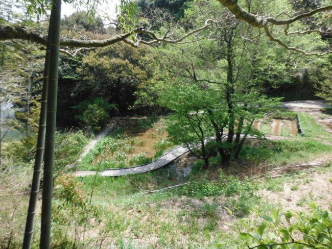 ビオトープ 千頭ヶ谷池