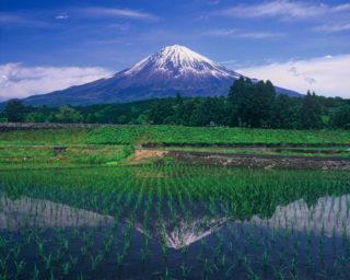 田面に映る逆さ富士