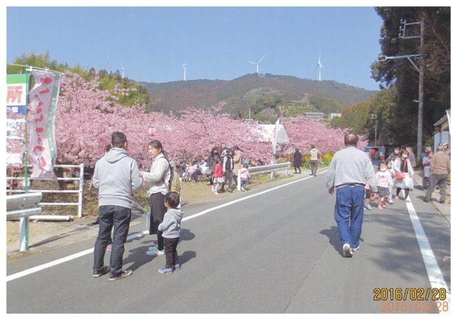 滝沢の河津桜祭り