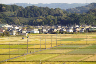 基盤整備された農地(水田3倍活用農法)