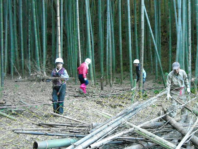 伊豆の国市韮山の竹林整備ボランティア