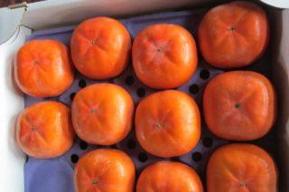 治郎柿の収穫時期