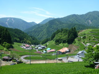 静岡のマチュピチュ(茶園)