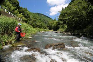 太田川水系の鮎釣り