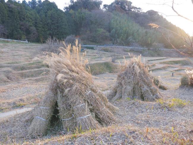 茶草場農法