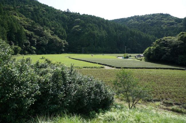栗ノ島茶園