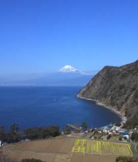 井田田園と海越しの富士