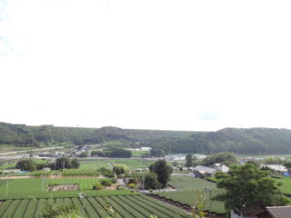 茶畑(島田市湯日)