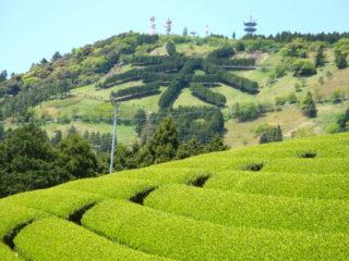 粟ヶ岳の茶文字