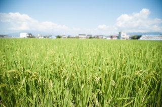 ほ場整備された平坦な農地