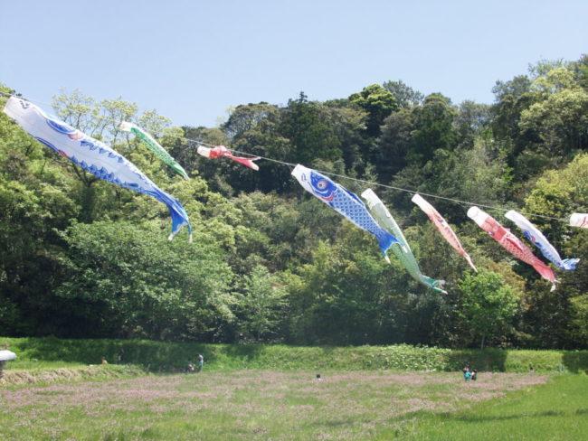 大賀茂れんげ祭り