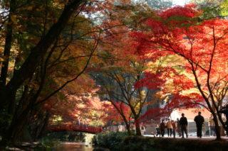 小國神社周辺の四季