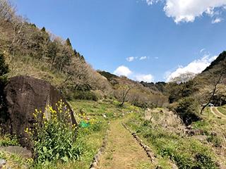 昔ながらの日本の農村風景