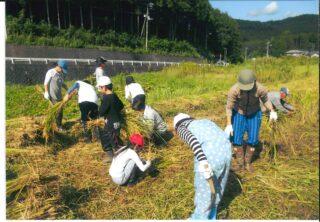 芝富小学校農業体験