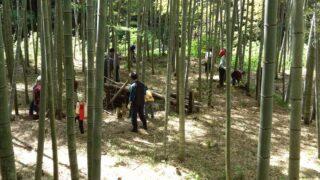 竹林(山田川自然の里)