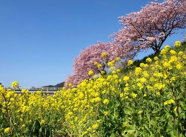青野川ふるさと公園