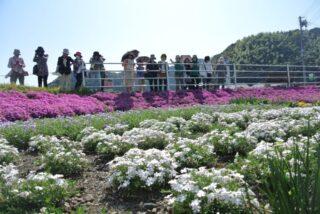 小瀬戸の花畑