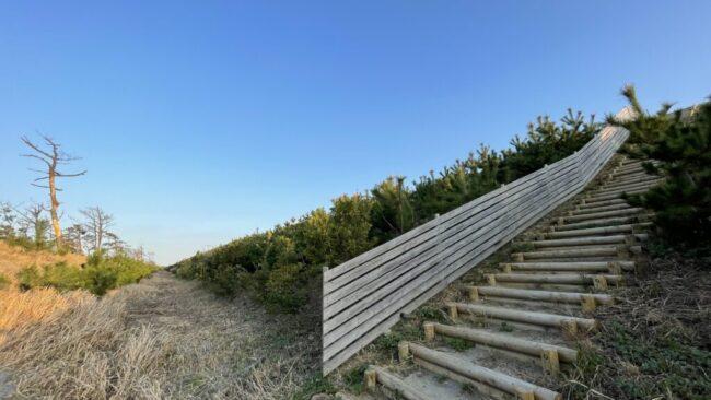 森の防潮堤